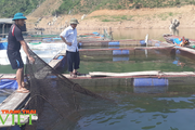 Lai Châu: Phát huy hiệu quả đồng vốn Quỹ hỗ trợ nông dân