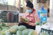 Tỉnh Sơn La vừa xuất khẩu 60 tấn xoài tượng da xanh sang nước nào?