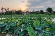 Tiếp tục nắng nóng, chỉ số tia tử ngoại tại Hà Nội đạt ngưỡng nguy hiểm