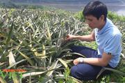 Nông dân Lê Lợi trồng cây ăn quả, mở hướng thoát nghèo