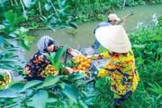 Kết hợp giữa nông nghiệp - du lịch: Cơ hội để lợi cả đôi đường?