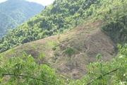 Phát hiện một thi thể đang phân hủy trên núi