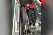 """Tóm được """"quái ngư"""" cá tầm khủng trăm tuổi, dài 2m nặng 108kg khiến dân tình sửng sốt"""