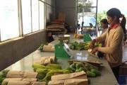 Lâm Đồng: Mô hình tổ hợp tác sản xuất rau hữu cơ siêu sạch của đồng bào Churu