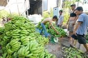 Trung Quốc đang thừa loại quả này, giá chuối tại Đồng Nai chỉ còn vài ngàn/kg, nông dân vẫn đua nhau trồng