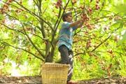 Đồng Tháp: Bài toán sản xuất nông sản sạch đi kèm với khâu tiêu thụ