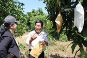 Xuất khẩu xoài sang Trung Quốc: Nguy cơ Campuchia sẽ vượt mặt Việt Nam?