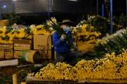 Lâm Đồng: Chợ hoa Đầm Sen mở cửa trở lại khiến giá hoa cúc Đà Lạt tăng vọt trở lại