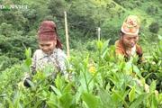 Phát triển kinh tế hộ gia đình, hướng đi thoát nghèo cho nông dân vùng cao