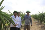 Trung Quốc đột nhiên tăng mua loại trái cây này, nông dân Bình Thuận, Long An vẫn đứng ngồi không yên