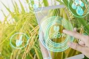 Cục Bảo vệ Thực vật và Viettel hợp tác xây dựng app 'bắt bệnh' cho lúa