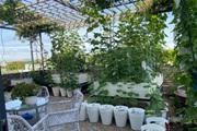 Vườn rau hữu cơ xanh mướt mát của mẹ đảm Đà Nẵng từng không biết gì về trồng trọt