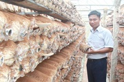 Anh thanh niên Thanh Hóa 36 tuổi đã có 3 sản phẩm OCOP trong tay từ cây nấm, doanh thu tiền tỷ mỗi năm
