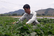 Thái Nguyên: Trồng những thứ cây gì quanh năm mà dân ở làng này rủng rỉnh tiền tiêu?