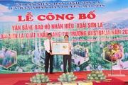 """Sơn La: Công bố văn bằng bảo hộ nhãn hiệu """"Xoài Sơn La"""""""