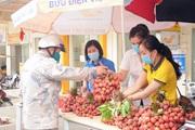 Tuổi trẻ Sơn La góp sức tiêu thụ hơn 20 tấn vải thiều Bắc Giang