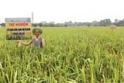 FAO tài trợ 400.000 USD để Việt Nam xây dựng chiến lược quản lý sức khỏe cây trồng tổng hợp