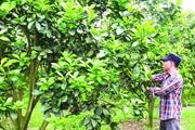 Một ông nông dân Thanh Hóa trồng lung tung đủ thứ cây theo kiểu chẳng giống ai, thu nhập mỗi năm hơn 2 tỷ đồng