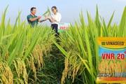 Cấy những giống lúa này, nông dân xứ Mường không tốn tiền mua thuốc trừ sâu bệnh, năng suất cao bất ngờ