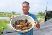 """Nghệ An: Anh nông dân huyện lúa thu bộn tiền nhờ """"thả"""" cua trên ruộng"""