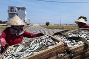 """Quảng Trị: Cả làng làm nghề """"thích nắng, sợ mưa"""""""