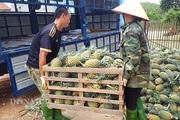 Lạng Sơn đề nghị công chức hỗ trợ tiêu thụ nông sản, tối thiểu 5kg/người