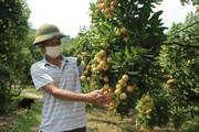 Bảo vệ uy tín nông sản Việt để nồi cơm của nông dân ngon hơn