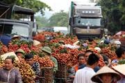 Vụ vải thiều 2021, Bắc Giang thu về hơn 6.800 tỷ đồng
