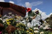 """Doanh nghiệp và người dân """"khóc ròng"""" vì hàng trăm nghìn cành hoa xuất khẩu bị trả ngược"""