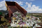 """Vì sao hàng vạn cành hoa Đà Lạt xuất khẩu sang Úc buộc phải cho """"quay đầu"""" về để tiêu hủy?"""