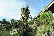 Khu vườn xương rồng đẹp không góc chết giữa lòng Hà Nội cho bộ ảnh lãng mạn giữa hoang mạc