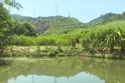 Thừa Thiên-Huế: Tận dụng địa thế gò đồi miền núi, ông nông dân phát triển mô hình vườn-ao-chuồng-rừng cho hiệu quả cao