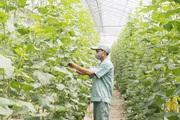 """Hà Nội """"siết"""" an toàn thực phẩm trong nông nghiệp"""