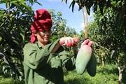 Quảng bá và tiêu thụ nông sản: Liên kết vẫn là mắt xích quan trọng nhất