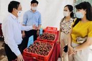 Hội Nông dân Nghệ An: Giúp hội viên, nông dân biết cách bán hàng online, xây dựng sản phẩm OCOP gắn sao