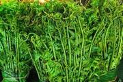 """Giá 200.000 đồng/kg, loại rau được cho là thần dược """"trường sinh"""" được người Hà Nội săn lùng"""