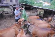 Hội Nông dân xã Hua Nhàn giúp hội viên phát triển kinh tế