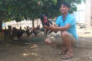 """Bí quyết """"vàng"""" để anh nông dân có trại gà to nhất xã kiếm tiền tỷ cực nhanh"""