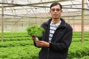 """Trang trại của anh Dũng """"cao"""" đưa hàng trăm tấn rau xanh ra thị trường nước ngoài có gì đặc biệt?"""