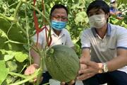 Quảng Bình: Hội Nông dân xây nhà màng trồng dưa công nghệ cao là có mục đích này đây