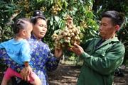 Sơn La: Lão nông bắt đất nương cằn cỗi nhả ra bạc triệu