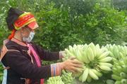 """Lai Châu thực hiện tốt """"mục tiêu kép"""" vừa phòng chống dịch, vừa phát triển kinh tế"""