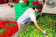 Liên minh Hợp tác xã Việt Nam triển khai chương trình 503 kết nối cung- cầu tiêu thụ nông sản