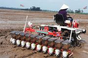 Giá phân bón tăng hoa mắt chóng mặt, chuyên gia khuyên nông dân làm ngay điều này để tiết kiệm
