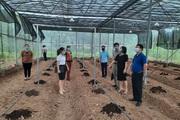 Hội Nông dân tỉnh Hoà Bình: Nâng cao hiệu quả phong trào sản xuất kinh doanh giỏi cho hội viên