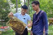 Thanh Hoá: Xã miền núi đẩy mạnh hiệu quả mô hình nuôi ong lấy mật