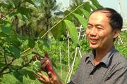 Tiền Giang: Anh nông dân trồng cây đặc sản thơm như dứa, cây chưa cho trái thương lái đã đặt mua giá cao