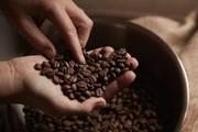 Giá nông sản hôm nay 29/8: Cà phê lên đỉnh trong 4 năm; hồ tiêu giảm nhẹ