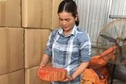 Lào Cai: Trồng thứ cây thân to như cột nhà, bóc vỏ thơm khắp rừng, nông dân bán sang 9 nước