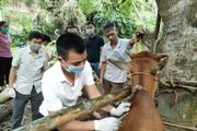 Bảo vệ đàn gia súc gia cầm chuẩn bị bung hàng đón nhu cầu tăng cao đợt cuối năm